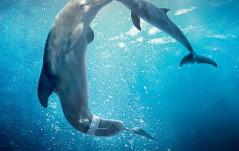 """Dolphin Tale 2"" makes a splash, or rather, a ripple"