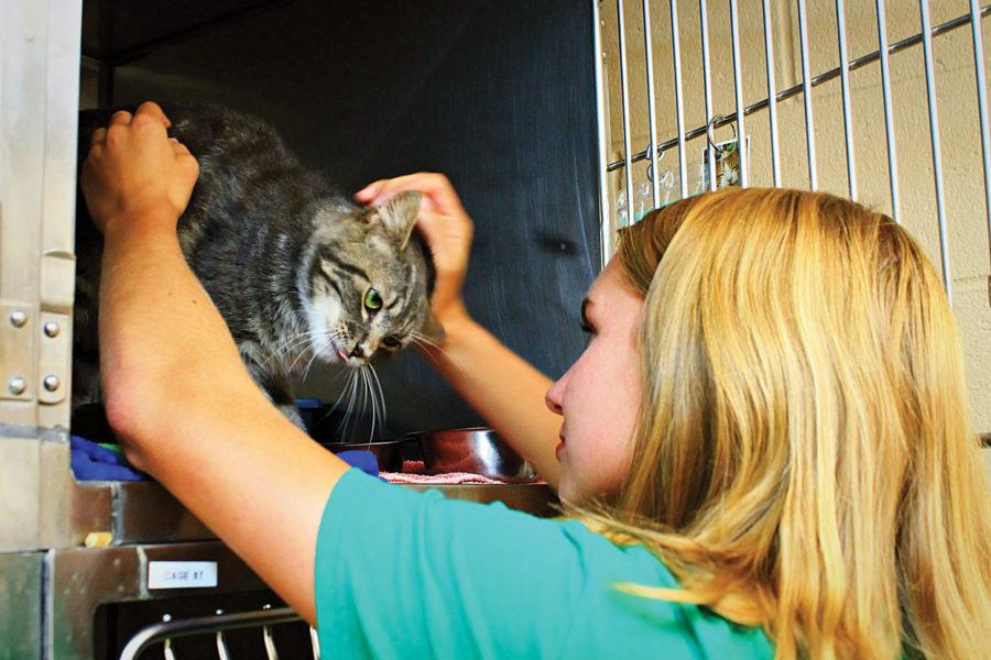 Number of local pets put up for adoption doubles, could result in euthanasia