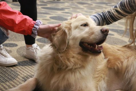 Therapy Dogs Photo Essay