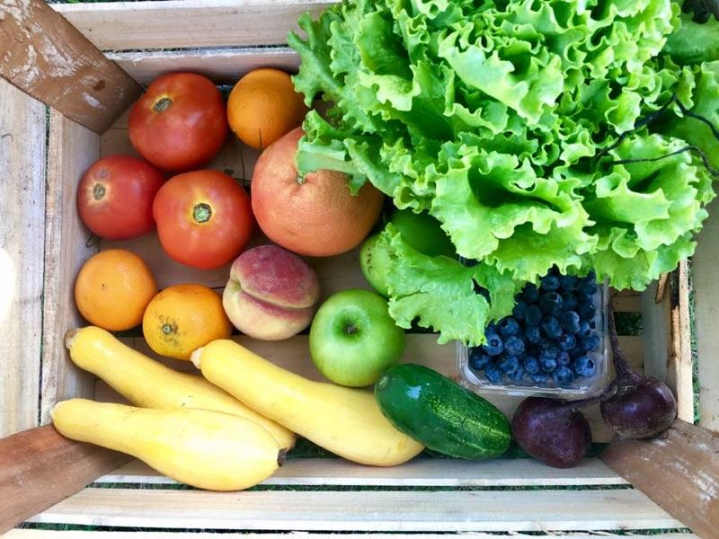 Pretty Produce: Students evaluate food waste  caused by appearance of produce