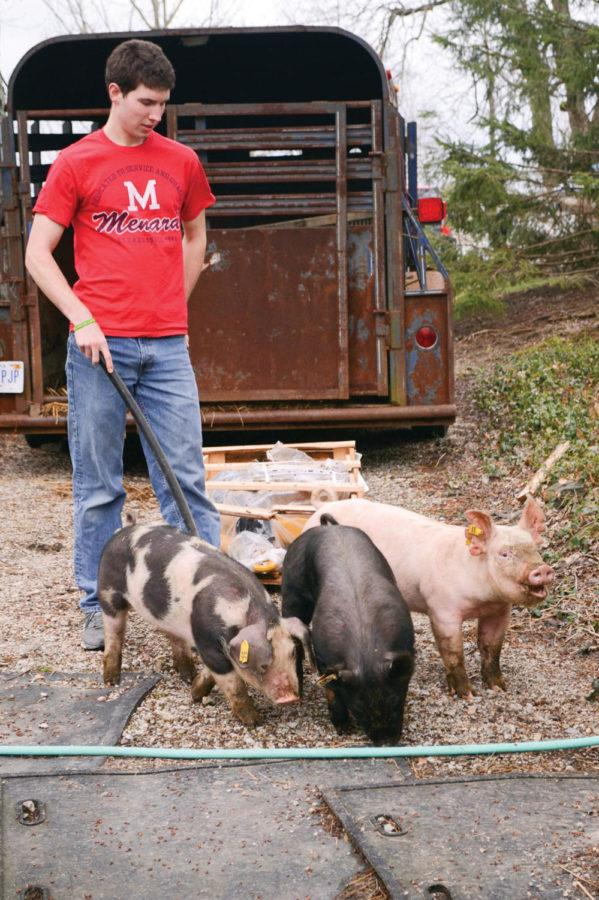 abel+with+pigs