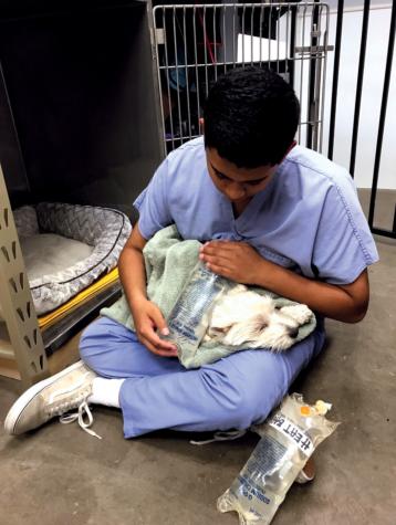 Q&A with junior Eshan Selvan, veterinary assistant