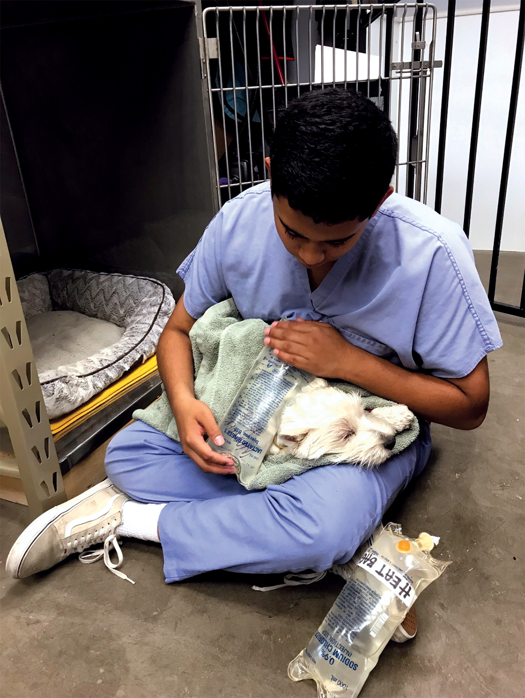 Eshan Selvan, veterinary assistant and junior, comforts a dog that went through a procedure. While Selvan assists in procedures like surgeries and examinations, he also works with animals before and after their procedures.