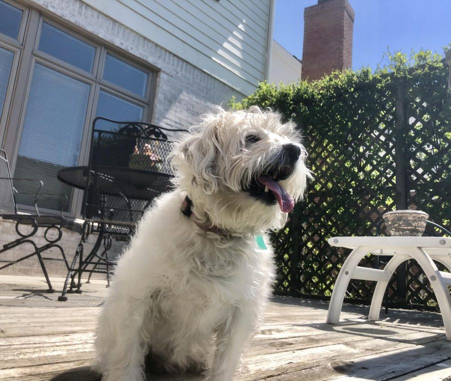Since e-learning has started, I have had the opportunity to spend more time with my dog, Carly. On sunny days, we both go outside to enjoy the weather. Generally, I will read while she sits on the patio and watches for squirrels and rabbits.