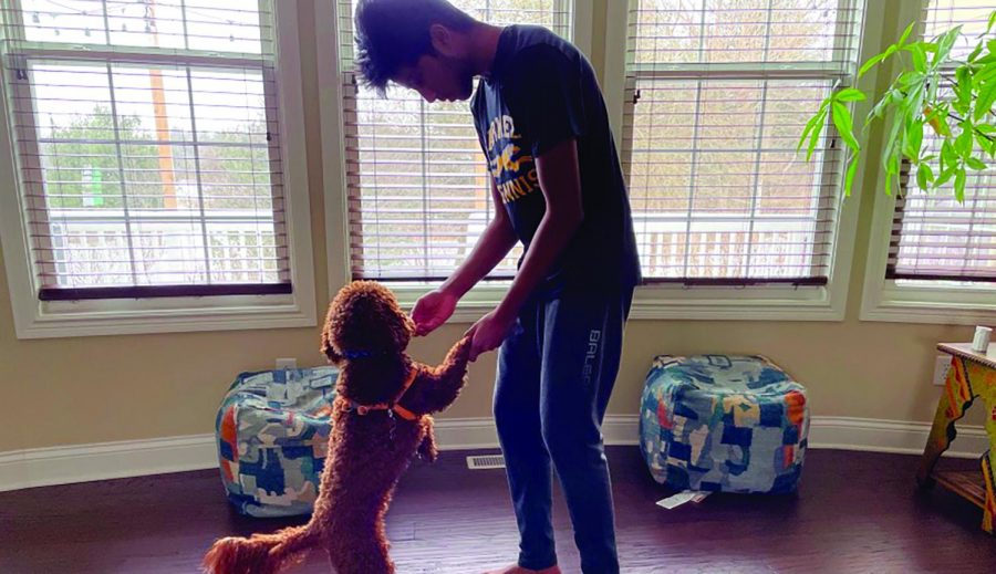 Sophomore Shri Atluri plays with his cockapoo, Teddy, on a winter afternoon. Like many others, Atluri and his family adopted their dog at the start of the quarantine.